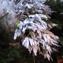 Crop_french_christmas_tree